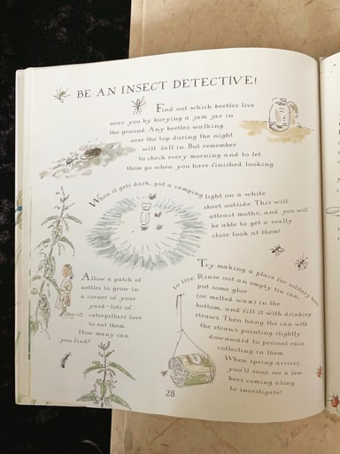 be an insect detective.png
