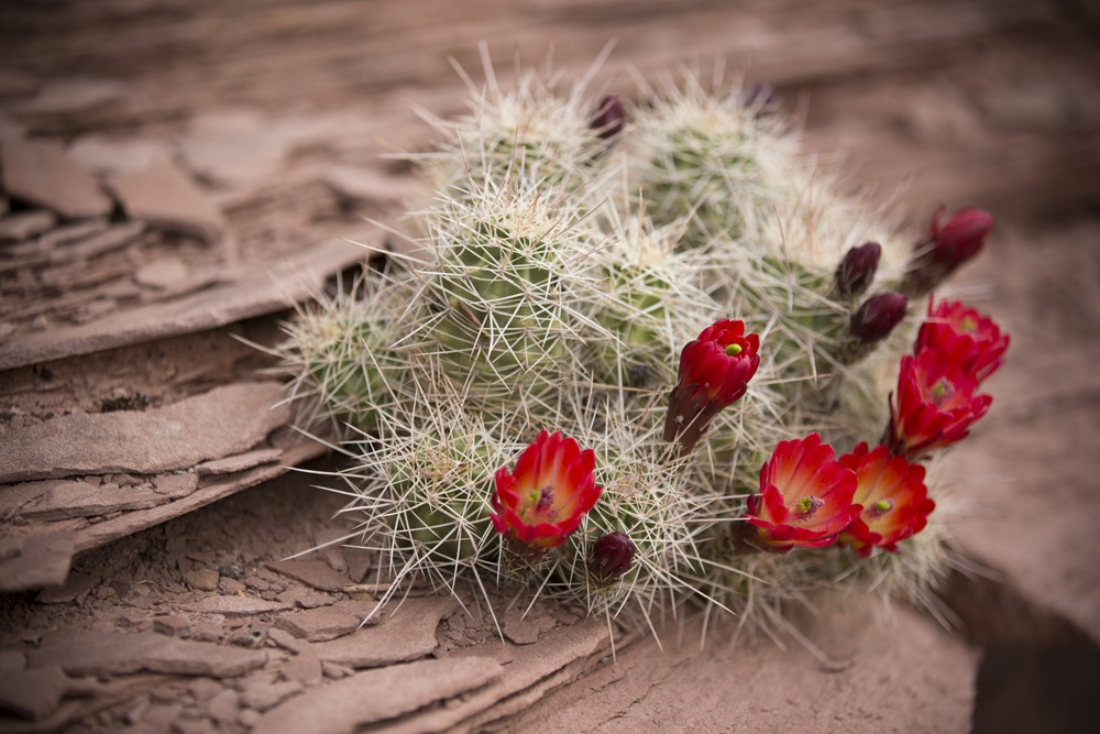 A blooming cactus along the Magnificant 7 trail system.