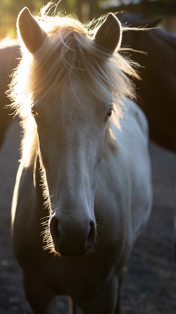 Lori Ackerman - Mustang
