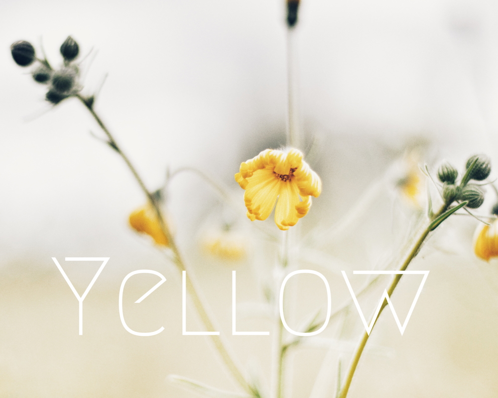 Liz Voelker - Yellow