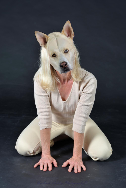 Co- Labrador Mutt