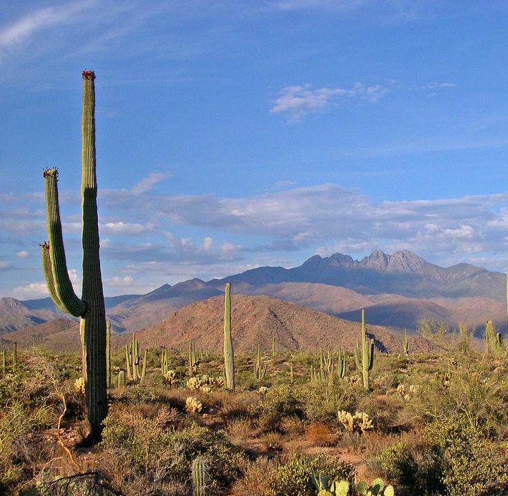 sonoran-desert-landscape.jpg