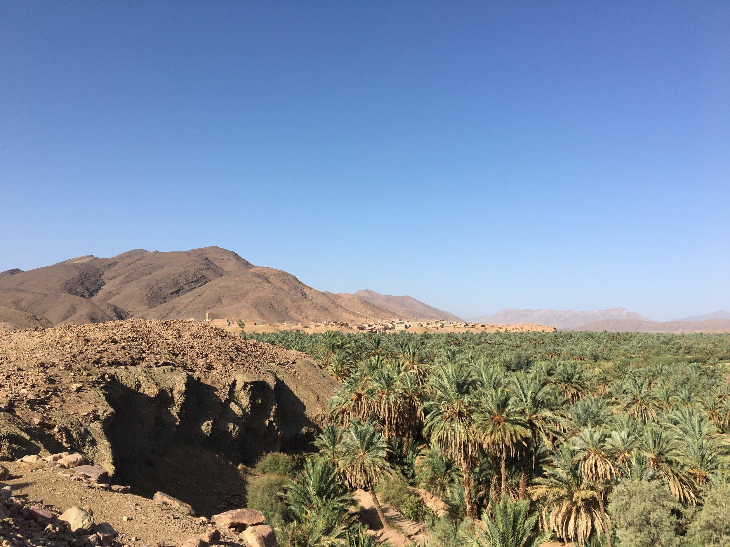 Sahara palms.jpg