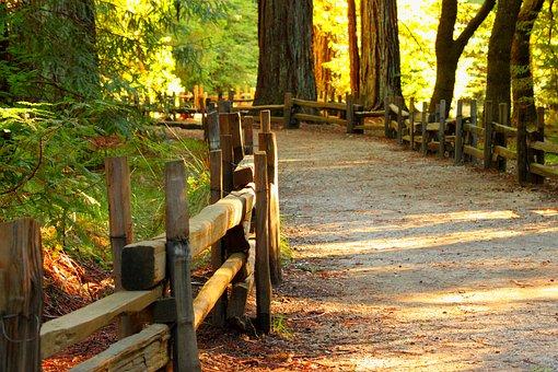 wood-3044473__340.jpg