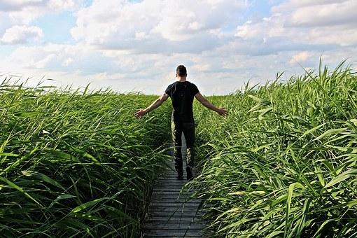 high-grass-1504280__340.jpg