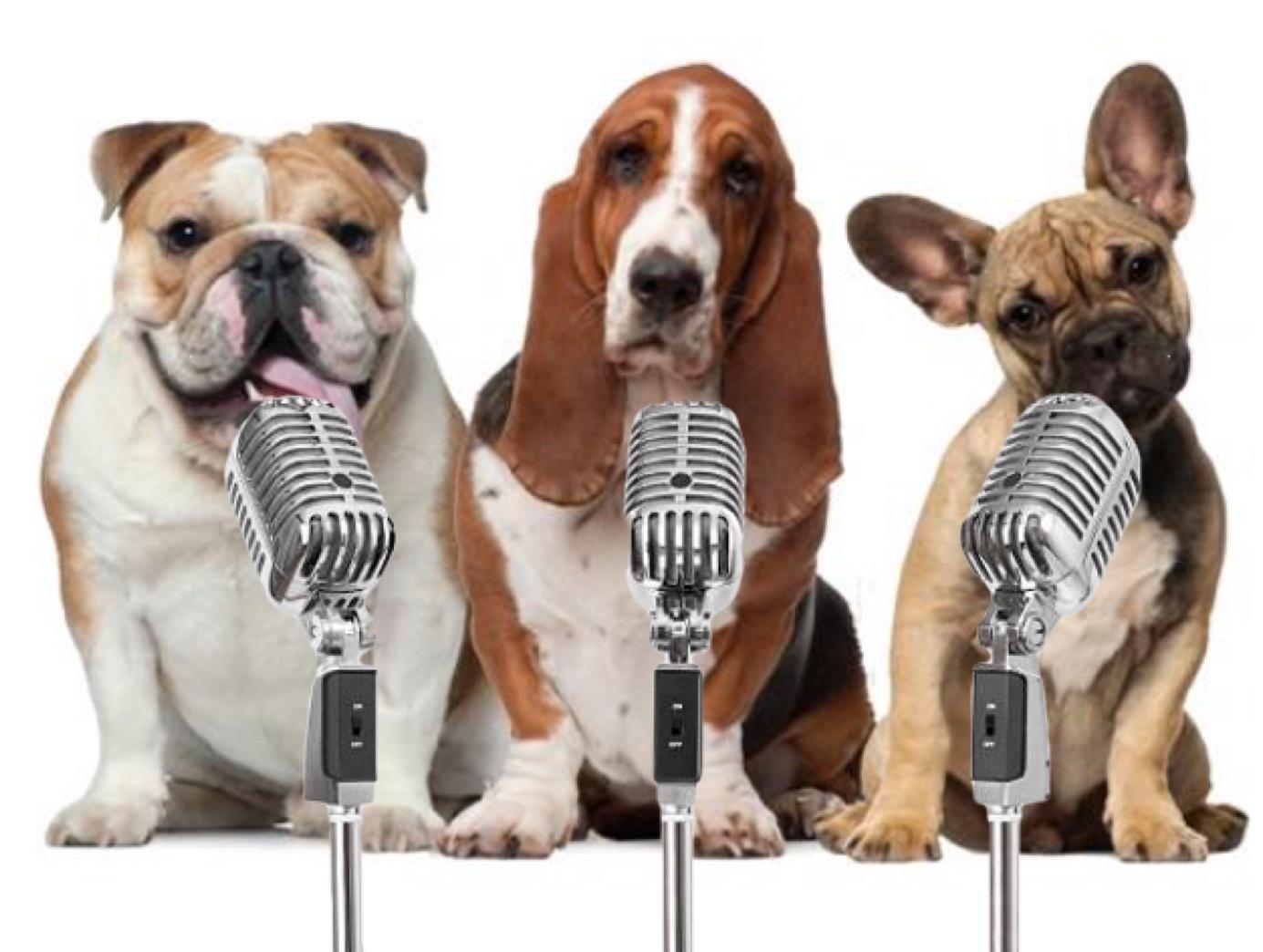 3 dogs, 3 mics.jpg