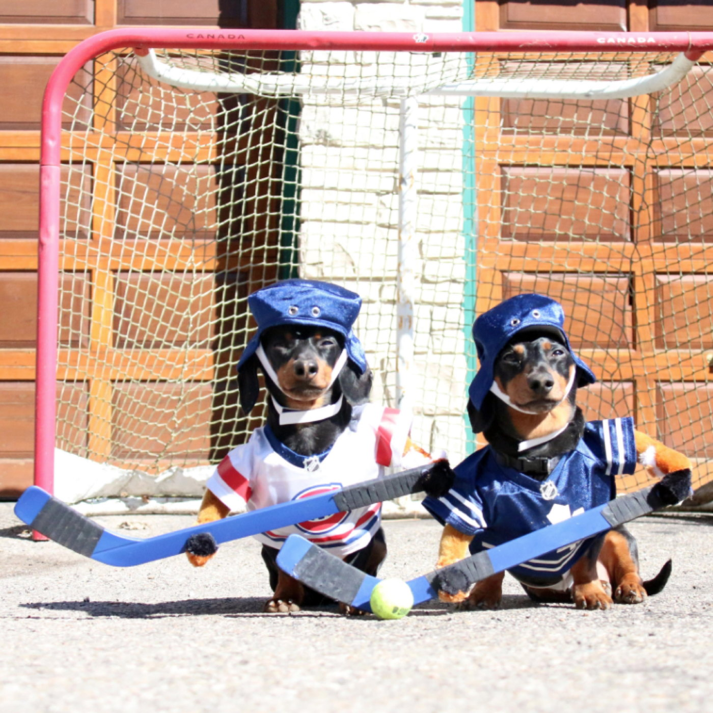 Hockey dogs.jpg
