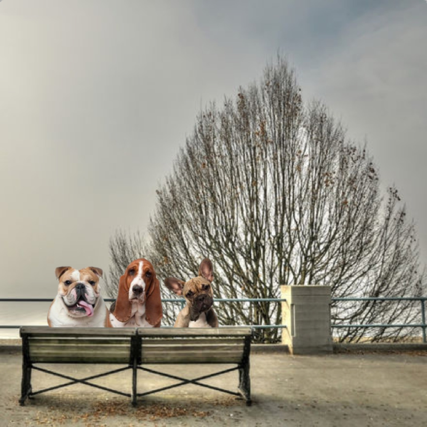 Shed Dogs of Vancouver