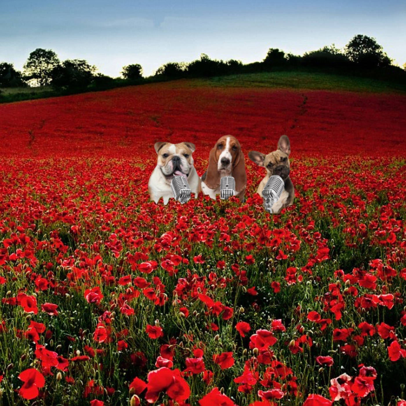 Shed Dogs in poppies.jpg