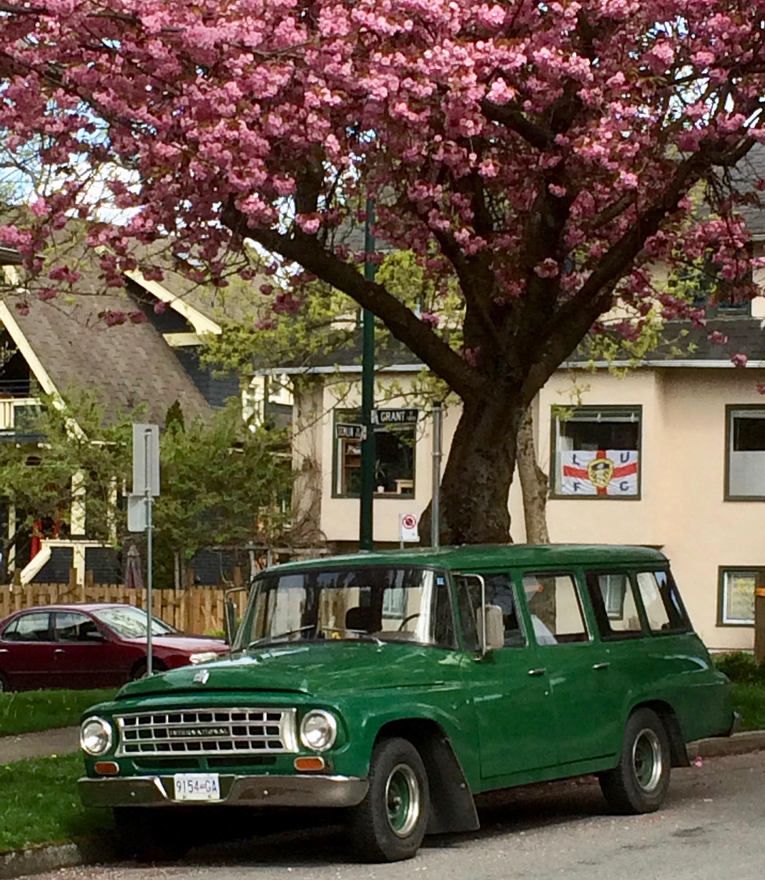 KJ's truck, a 1964 International Harvester Travelall, in forestry green