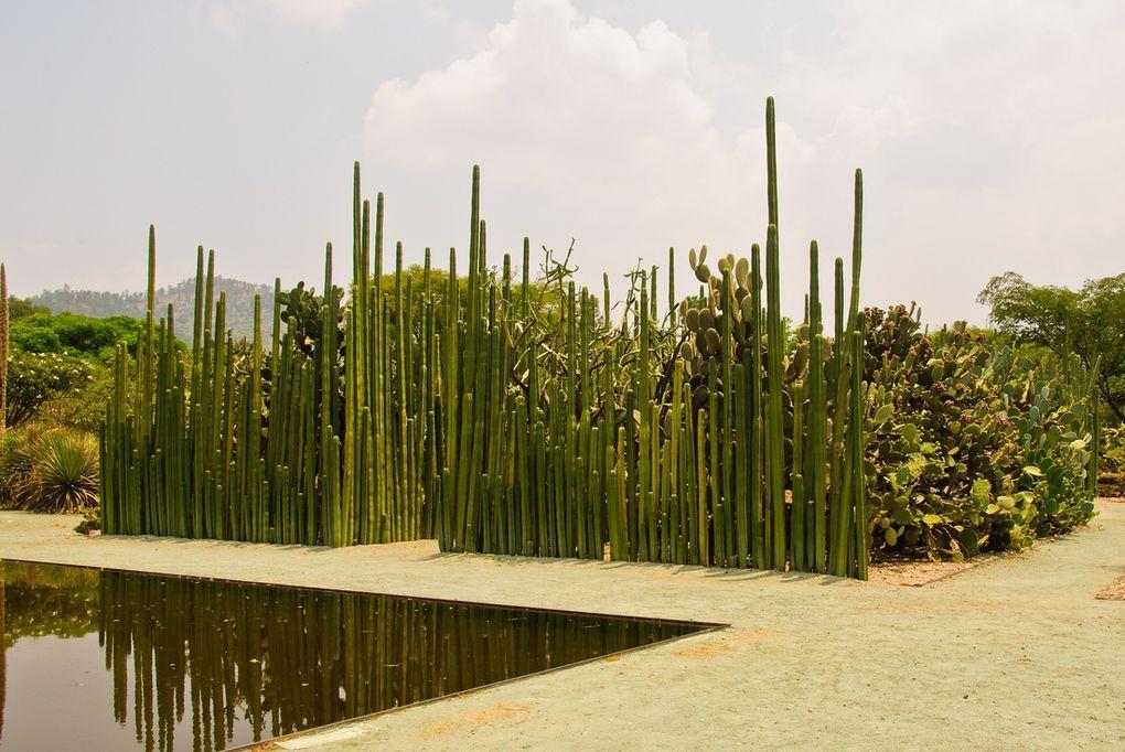 Oaxaca's botanical gardens