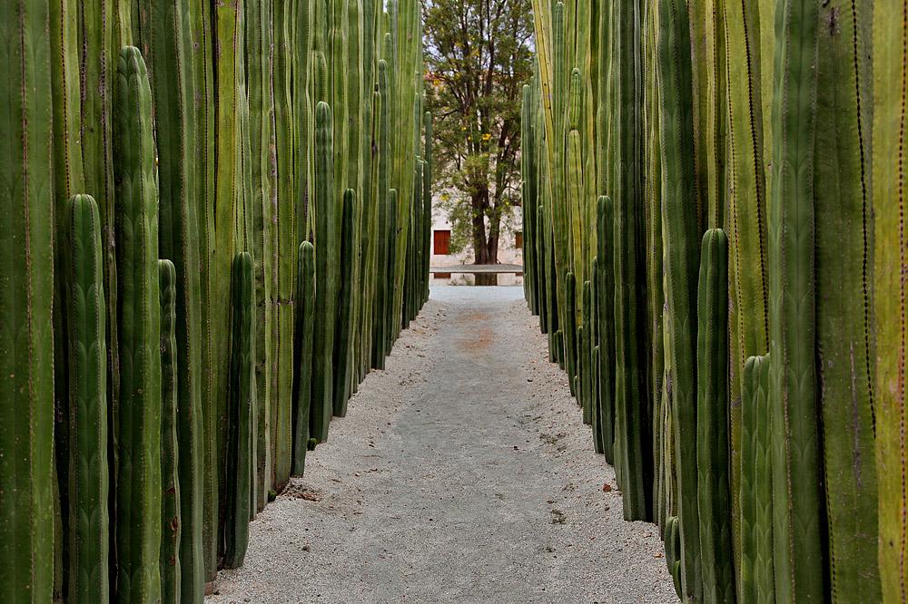 Oaxaca Botanical Gardens
