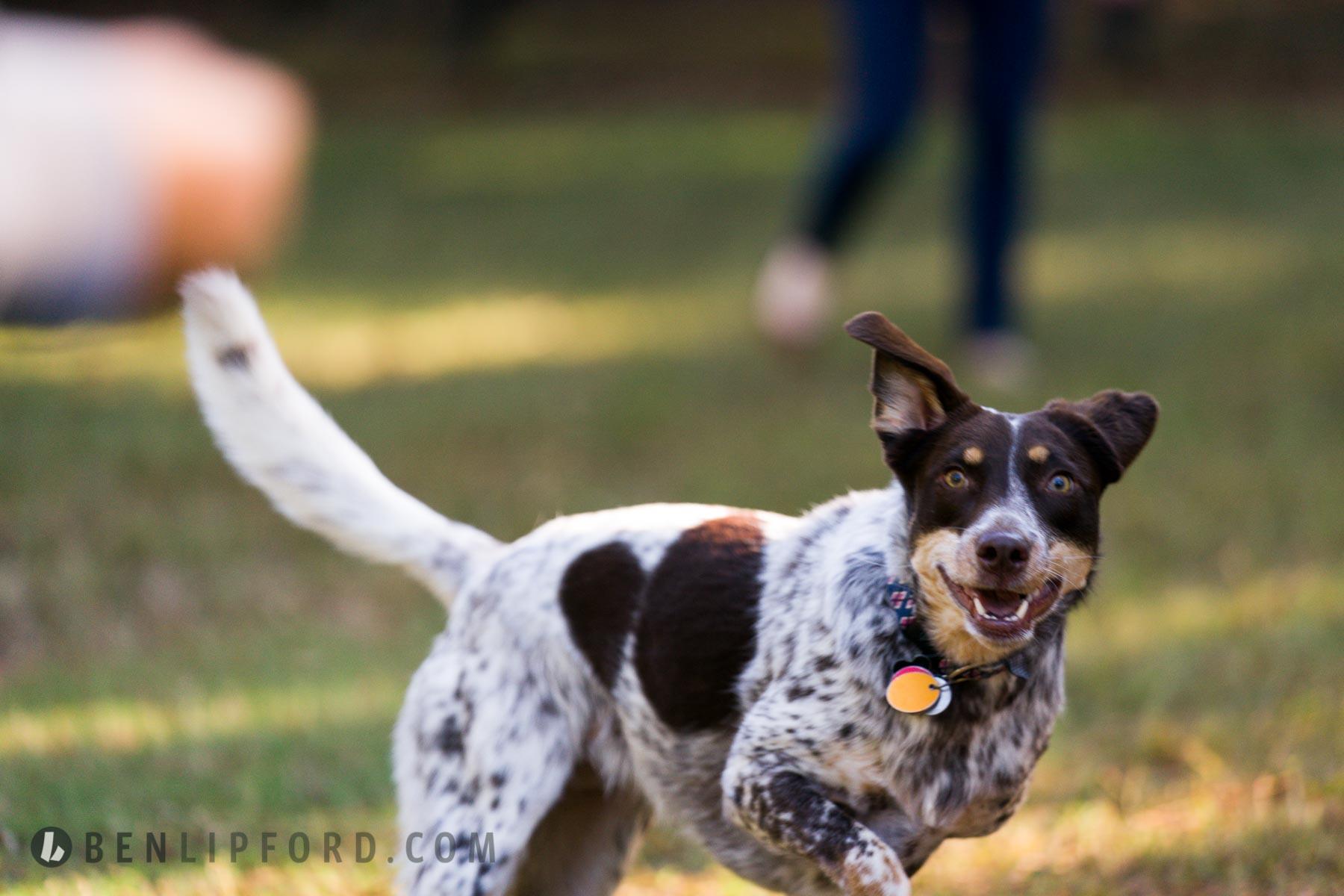 Copy of Kate Wes Engagement Willis Park Dog Alpharetta Georgia