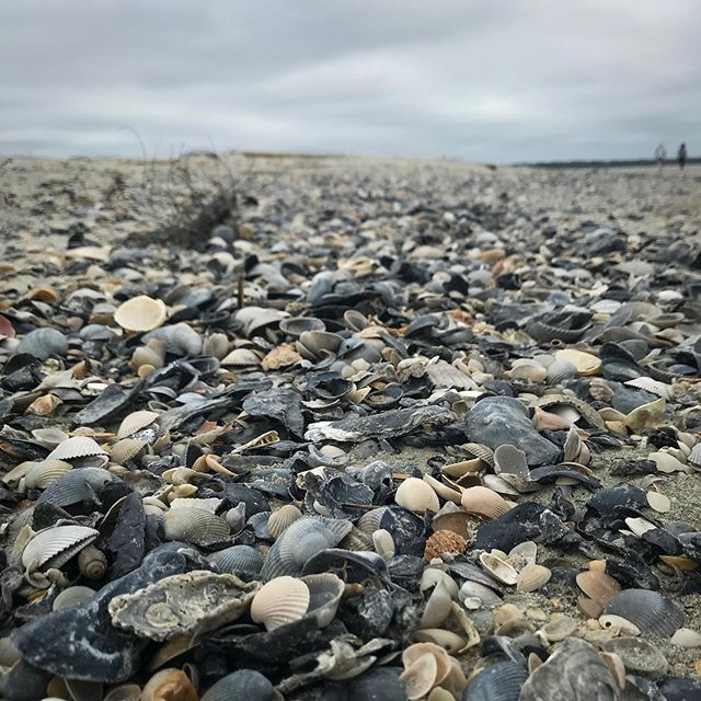 Walking along the #beach in #isleofpalms. . . #travel #travelholic #travelporn #travelbook #travelog #beachlife🌴 #beach🌊 #beachwalks👣 #beachwalks #beachwalk #isleofpalmsbeach #isleofpalmssc