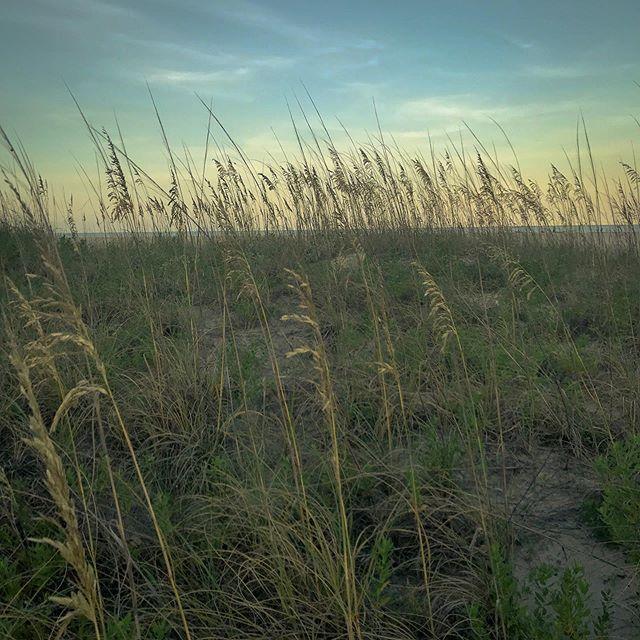 Evening in the dunes. . #sunsetbeach #sunsetoftheday #beach #beaches #beachlife🌴 #beachwalk #isleofpalms #isleofpalmsbeach #isleofpalmssc #dune #dunes