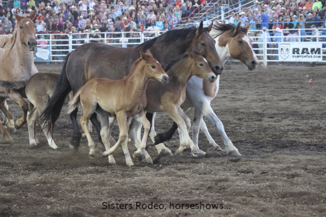 Sisters Rodeo-horseshows-quilt show-harvest faire