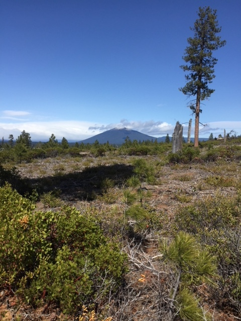 Black Butte from Metolius-Windigo Trail.JPG