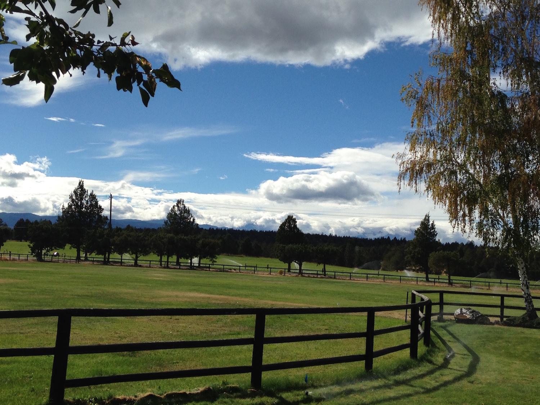 Front pasture copy.JPG