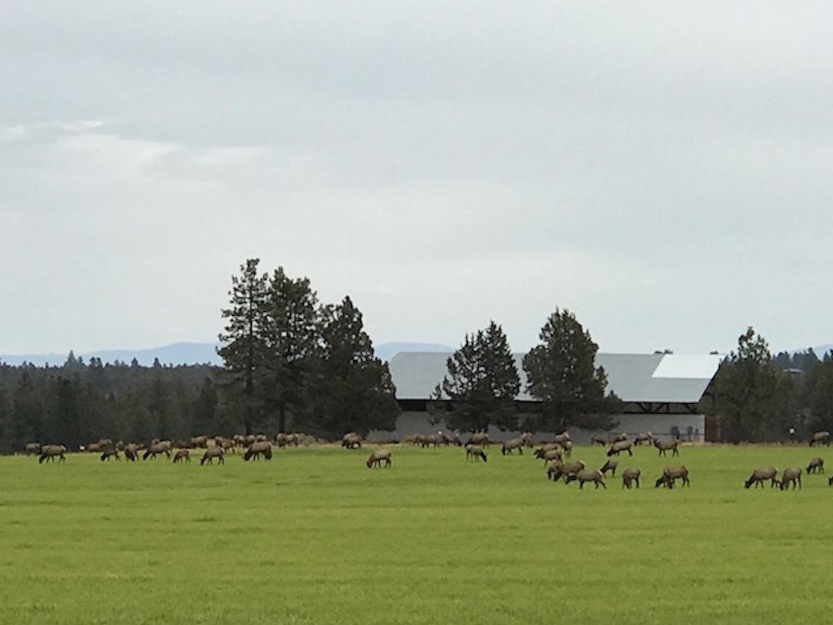 Antelope near Guest House.JPG