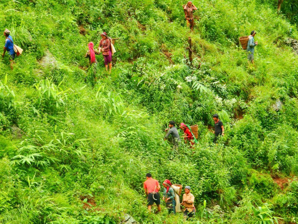 Nepal-Weeding-1024x768.jpg
