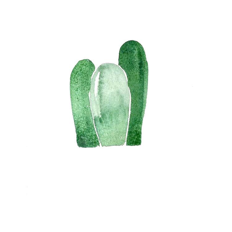 Cactus_002.jpg
