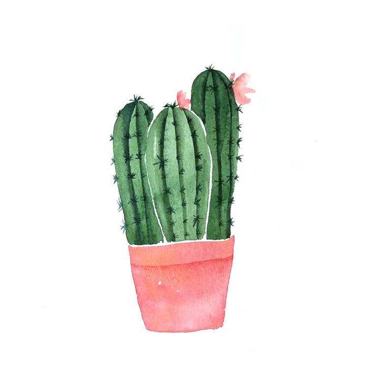 Cactus_008.jpg