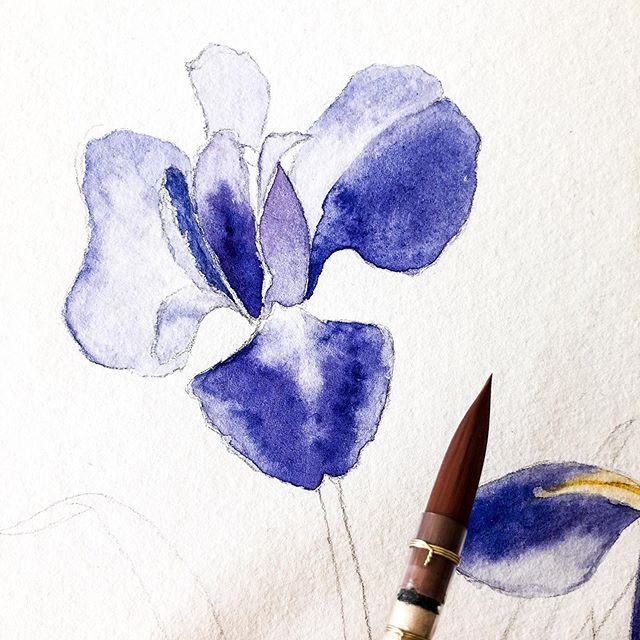 Haven't posted anything for a while. Too busy with preparing baby stuff, and getting a few other client projects done. Neglected my Instagram account. Just a little #WIP today. How are you coping with the cold weather in Sydney lately? . . . . . . . #worldwatercolorgroup #watercolor_gallery #inspiring_watercolors #watercolorpaint  #botanicalpainting #aquarellepainting #watercolorillustration #watercolorart #illustration #flowers #watercolors #watercolorpainting #floralpainting  #howtopaint #inprogress #process  #watercolortutorial  #painting #sydneyartist #artist #watercolorvideo #artistlife #artsy #artlover #artista #artisan #watercolor_daily #watercolor_blog