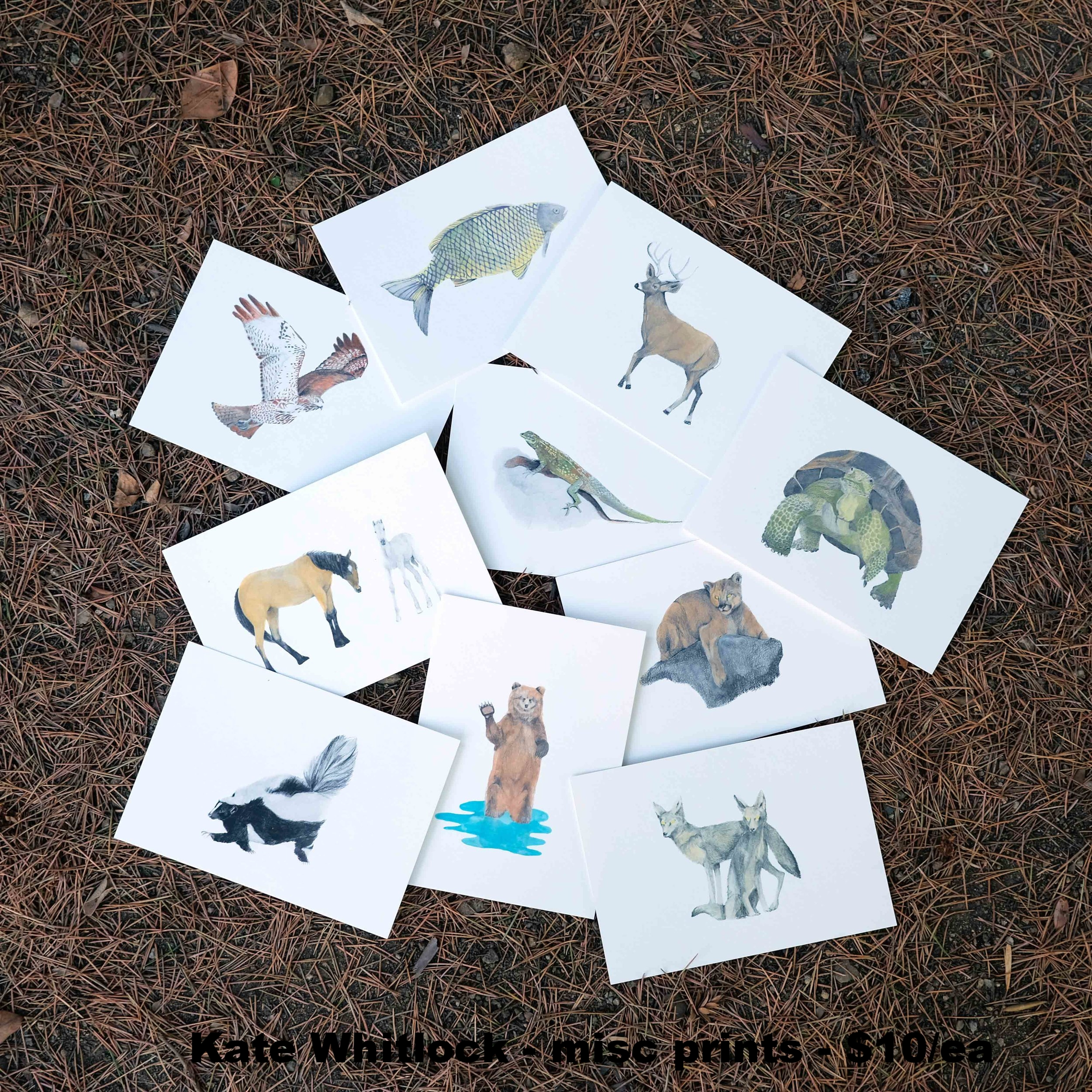 Kate Whitlock_Print-Set-Thumbnail.jpg