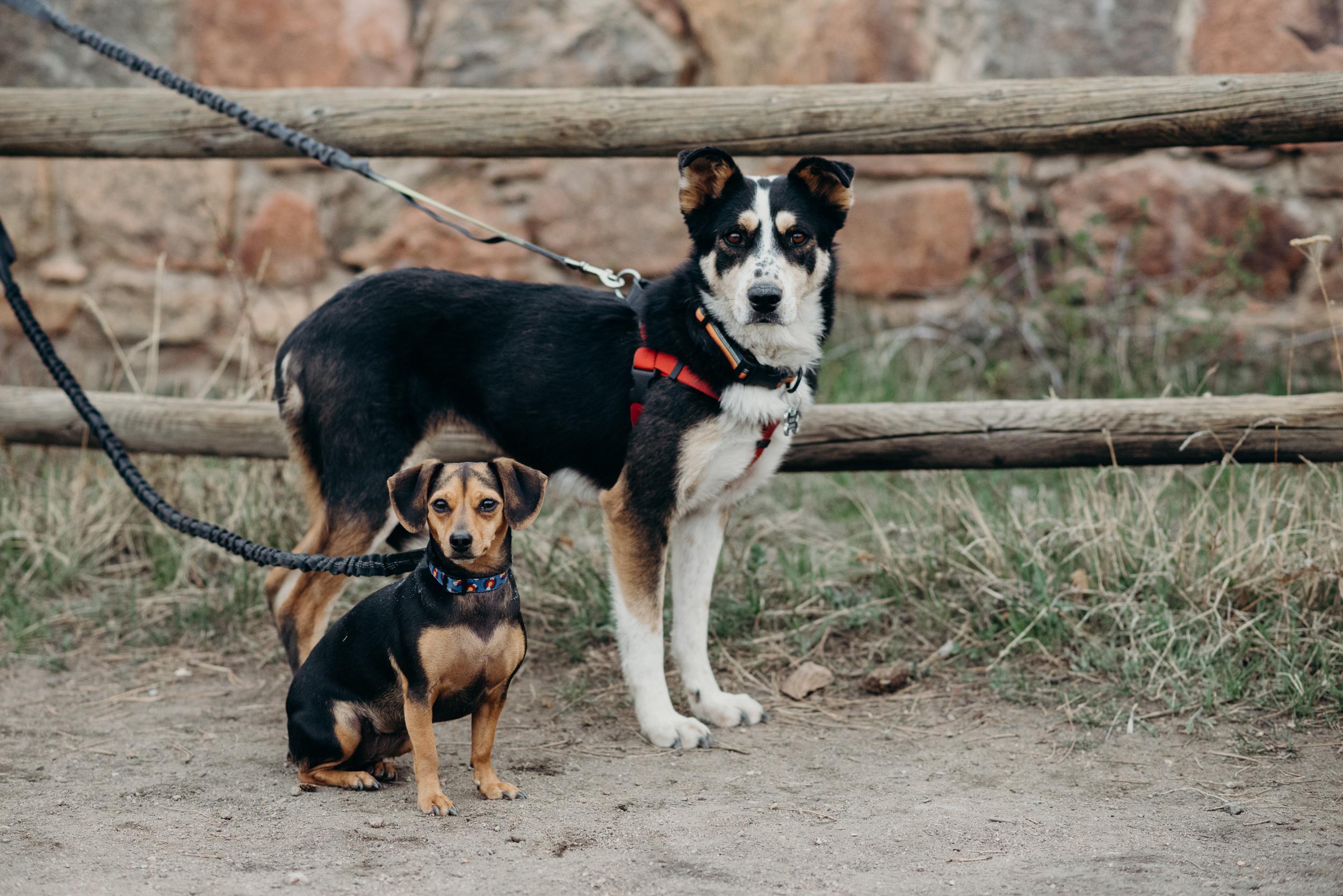 Denver-Colorado-Mt-Falcon-Engagement-Megan-Graham-Photography-7184.jpg