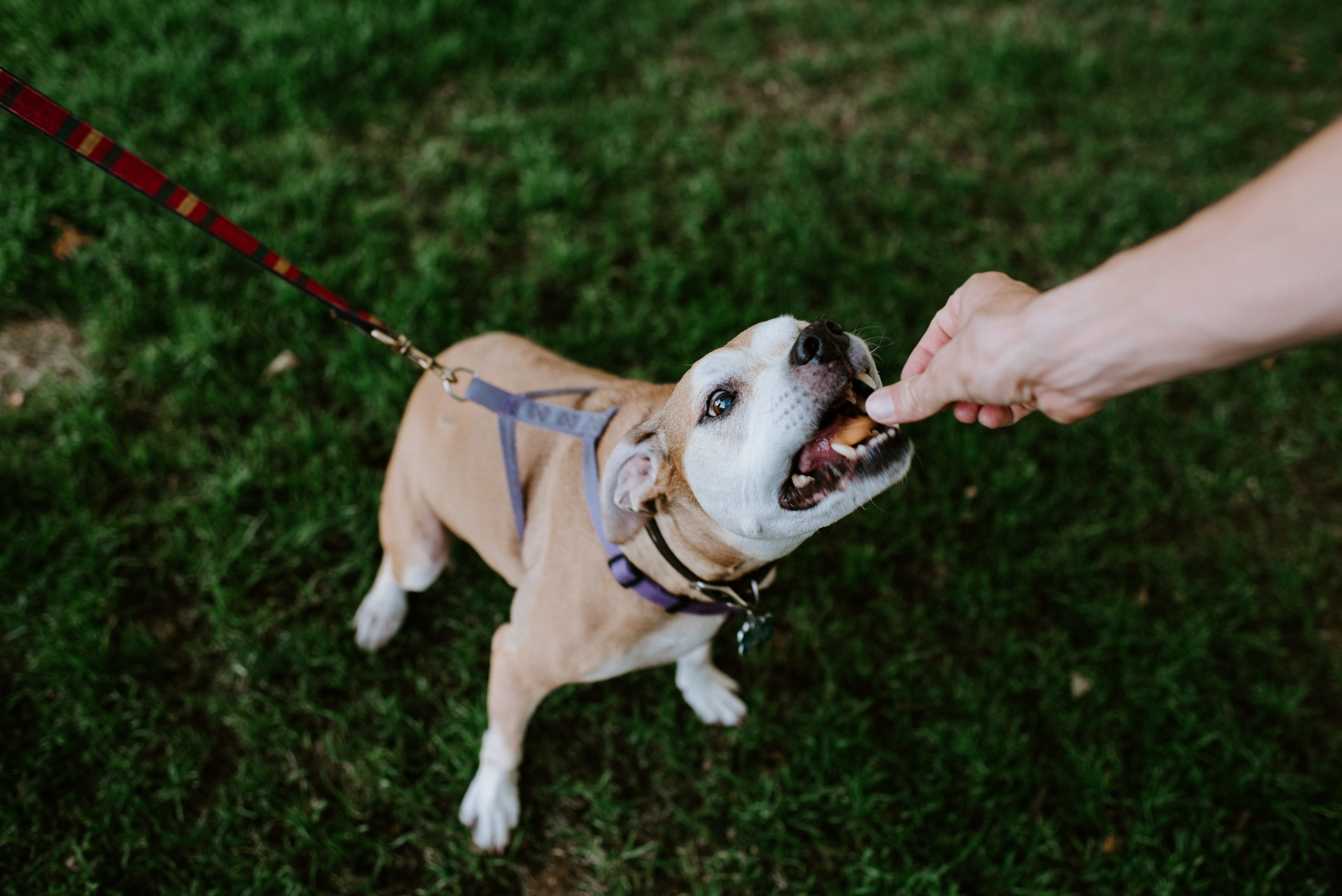 tips-bringing-dog-engagement-photo-session