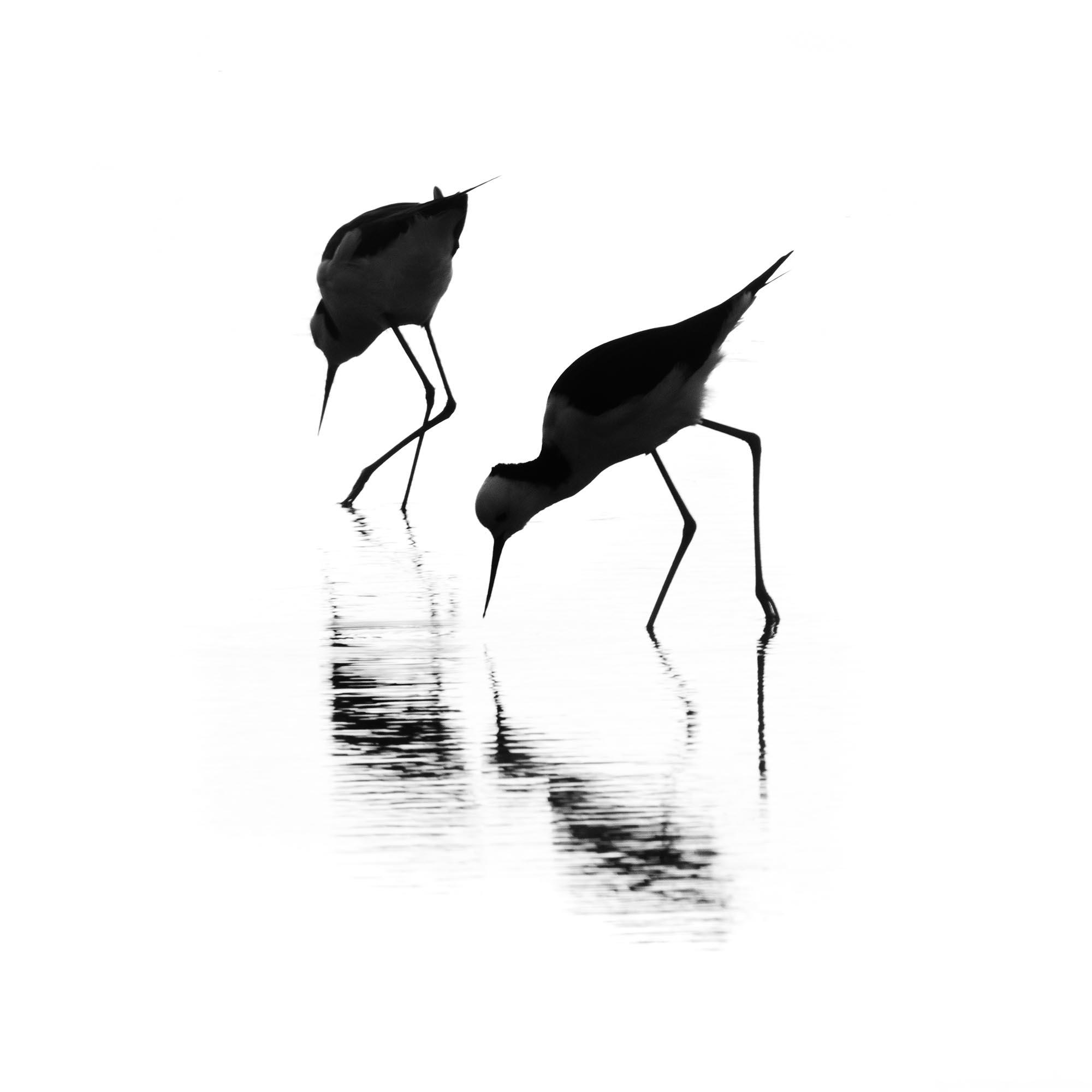 Ross Spirou_banded stilts.jpg
