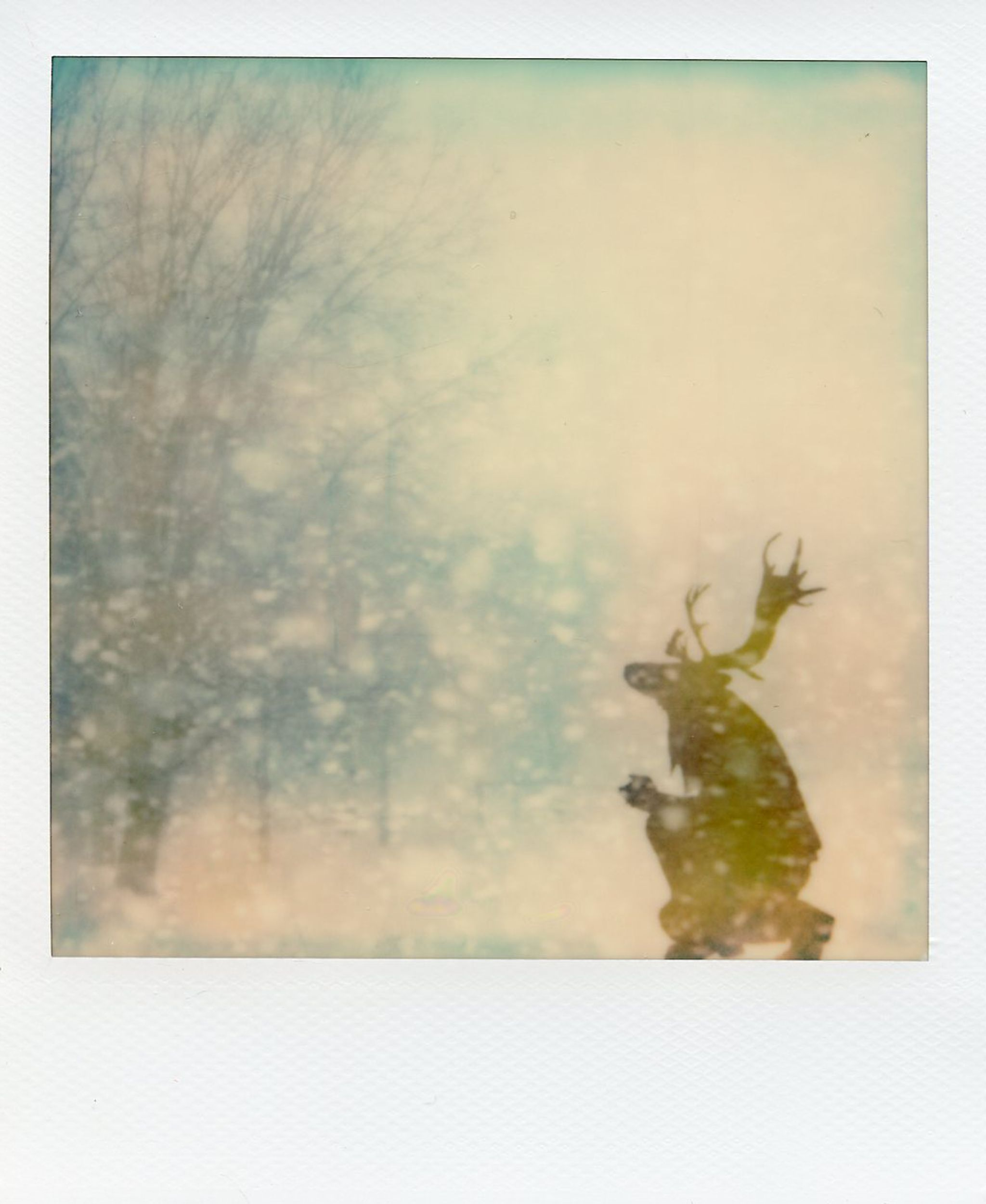 The Daimon Chroniles - Snowfall - Elk - Alan Marcheselli.jpg