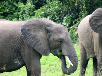 elephants-zambia.png