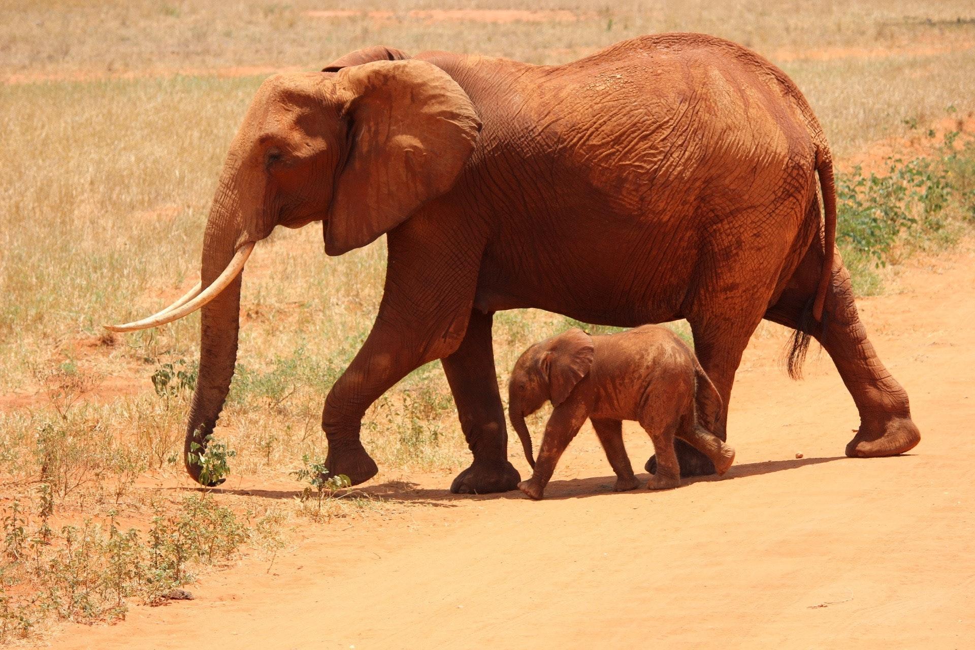 animals-calf-elephants-66898.jpg