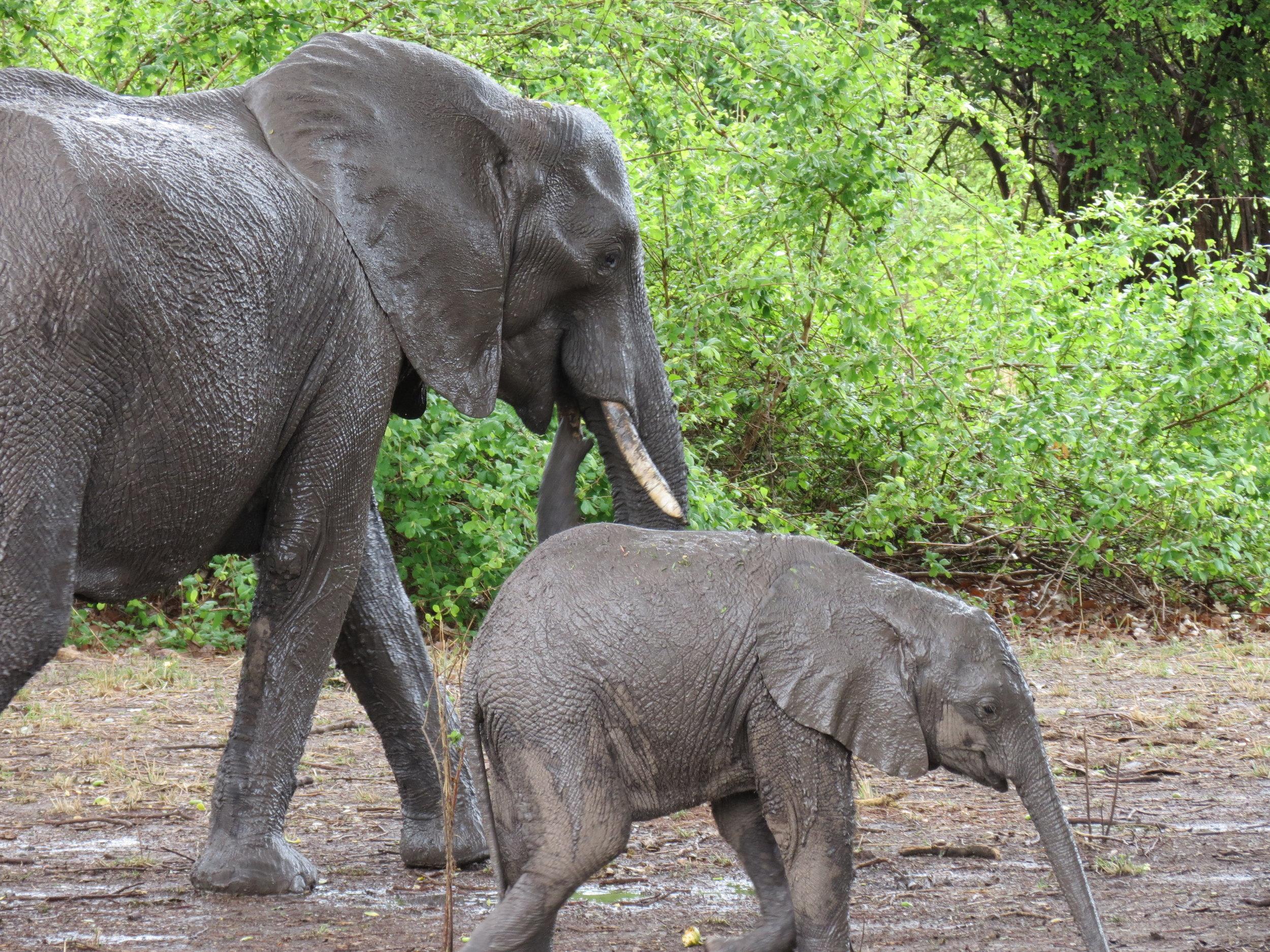 Day3-Elephants.JPG