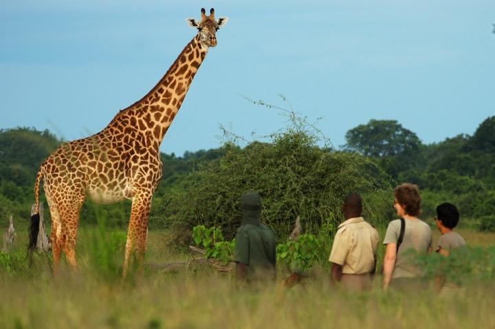Guided Safari