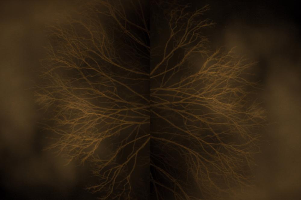 branch1000pt.jpg