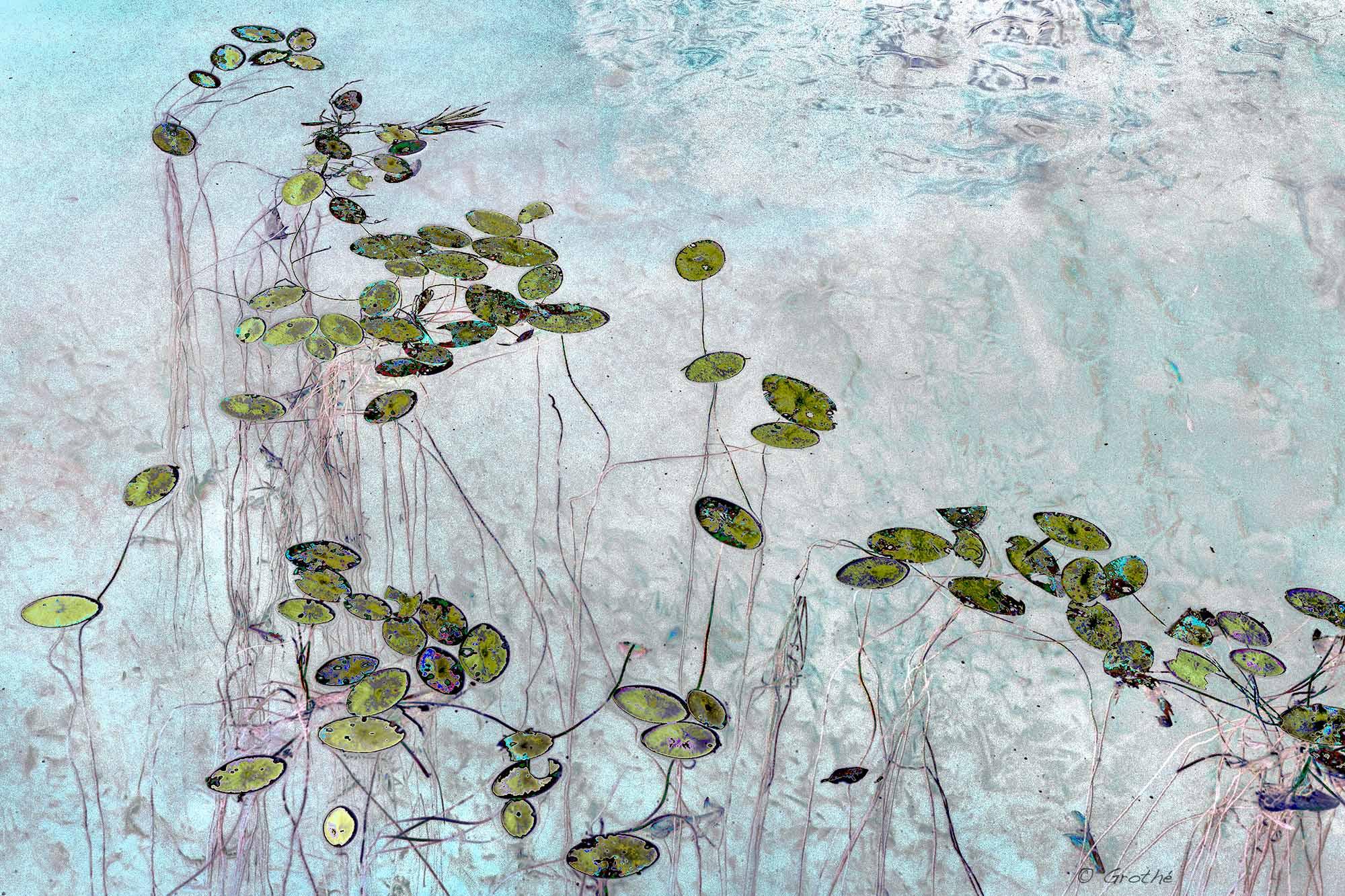 À fleur d'eau I