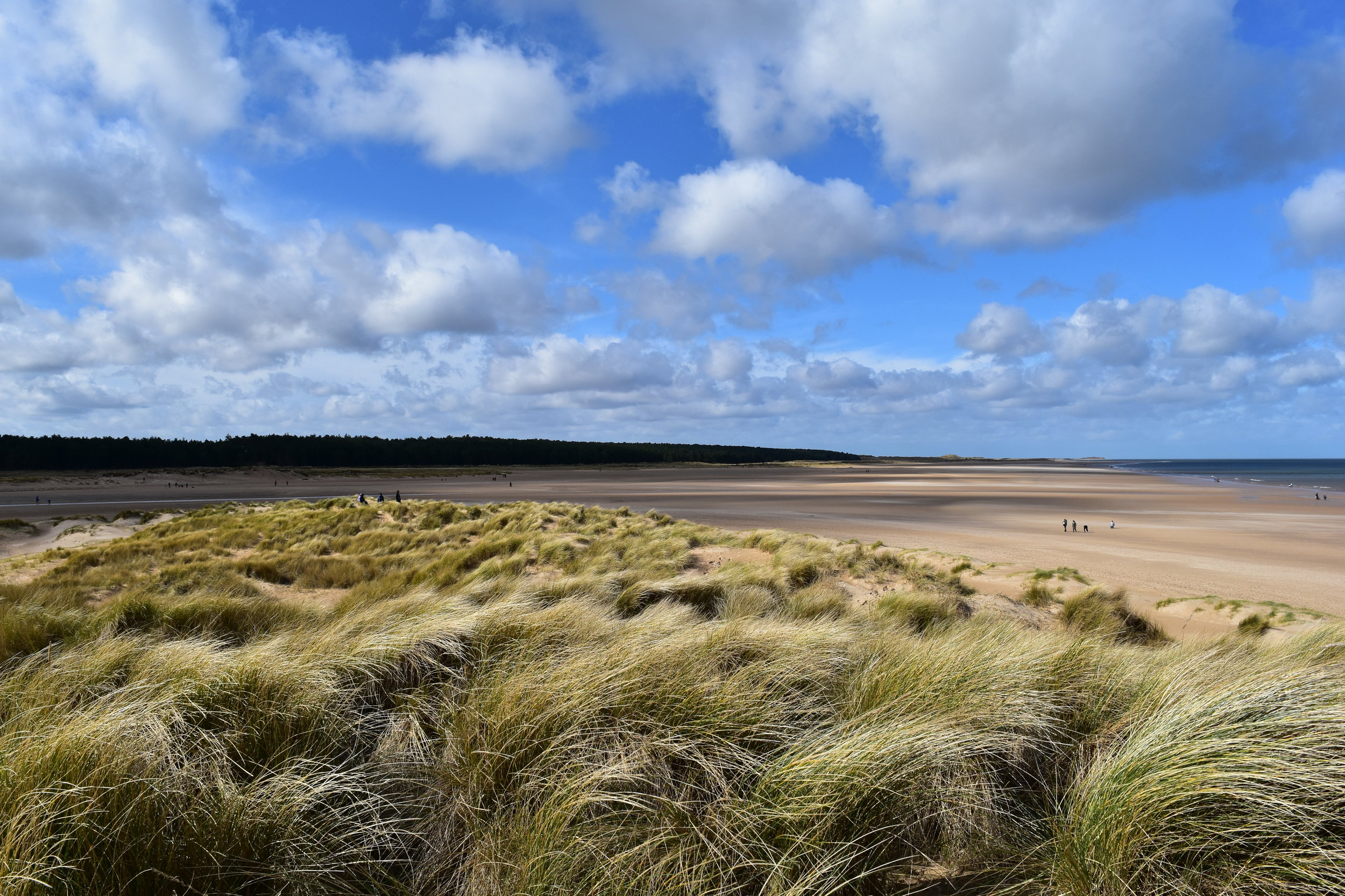 Holkham Beach - 1.5km down the coast from Wells is Holkham.  Deservedly designated an Area of Outstanding Natural Beauty, the wide beach with its rolling sand dunes is home to oyster catchers and ringed plovers.