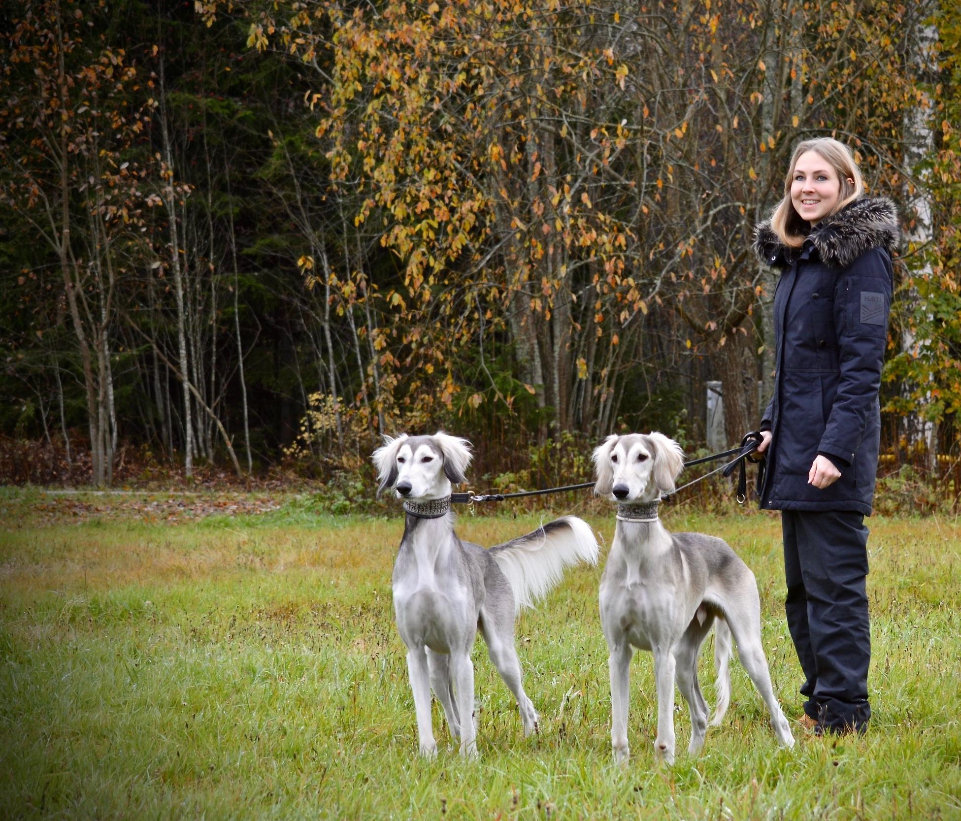 Sanni - Olen 28-vuotias eläintenkouluttaja Helsingistä. Alun perin olen kotoisin maaseudulta, missä olen viettänyt eläinten parissa koko ikäni. Aktiivisen koiraharrastuksen olen aloittanut 10-vuotiaana saatuani ensimmäisen oman koirani. Neljä vuotta myöhemmin aloin toimimaan koulutusohjaajana paikallisessa koirayhdistyksessä ollessani vain 14-vuotias. Tällä hetkellä kotoani löytyy kaksi salukipoikaa, joiden kanssa aikaani vietän niin pitkillä metsälenkeillä kuin näyttelykehien huumassa.Eläintenkouluttajan ammattitutkinnon (eläintenhoitaja erikoisosaamisalana eläintenkoulutus) olen suorittanut Helsingin Amiedussa. Tämän lisäksi olen valmistunut muotoilijaksi Hämeen ammattikorkeakoulusta sekä suorittanut kasvatustieteen perusopinnot Helsingin avoimessa yliopistossa, minkä koen hyödyksi myös nykyisessä työssäni. Kouluttajana haluan kehittyä jatkuvasti ja tartunkin mielelläni uusiin ja erilaisiin haasteisiin eläintenkouluttajan eettisiä sääntöjä noudattaen. Sekä eläimen että ihmisen hyvinvointi koulutustilanteessa on minulle ensiarvoisen tärkeää, minkä takia pohjaan koulutukseni koirakon yksilöllisten tarpeiden toteutumiseen.Koulutusmenetelmäni on käyttäytymistieteisiin pohjautuen operantti ehdollistaminen. Vahvisteita käyttämällä toivotunlainen käytös tehdään eläimelle kannattavaksi ja ei-toivottu kannattamattomaksi. Ennaltaehkäisevällä koulutuksella ei-toivottu käytös pyritään kitkemään ennen kuin varsinaisia ongelmia syntyy, jolloin myös eläin välttyy turhalta stressiltä. Iloinen koira sekä sujuva yhteistyö koirakon välillä ovat keskeisimmät avaimet molemmille mielekkääseen, tehokkaaseen oppimiseen!