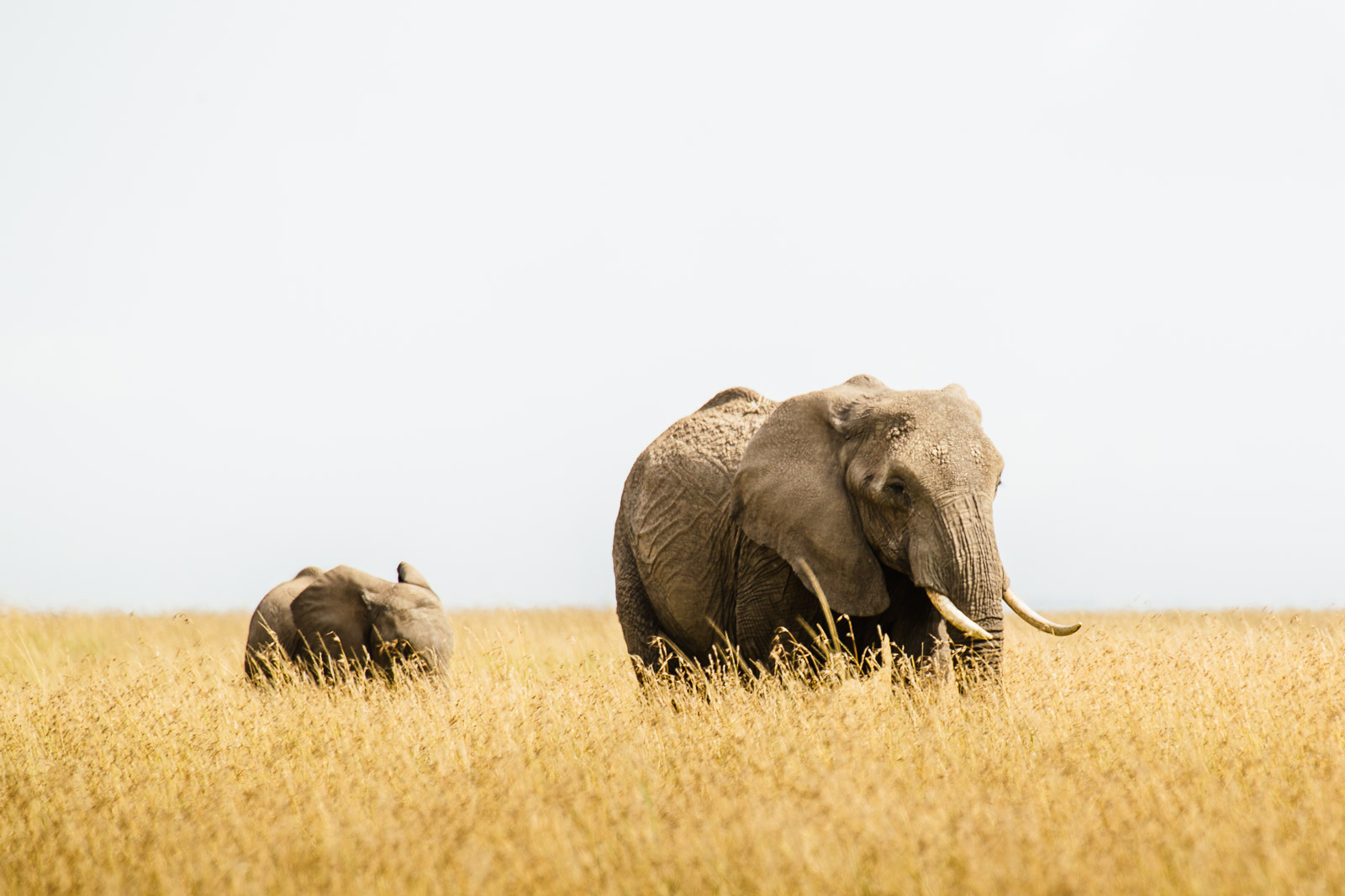 tanzania-africa-travel-photos-adventure-safari-3.jpg