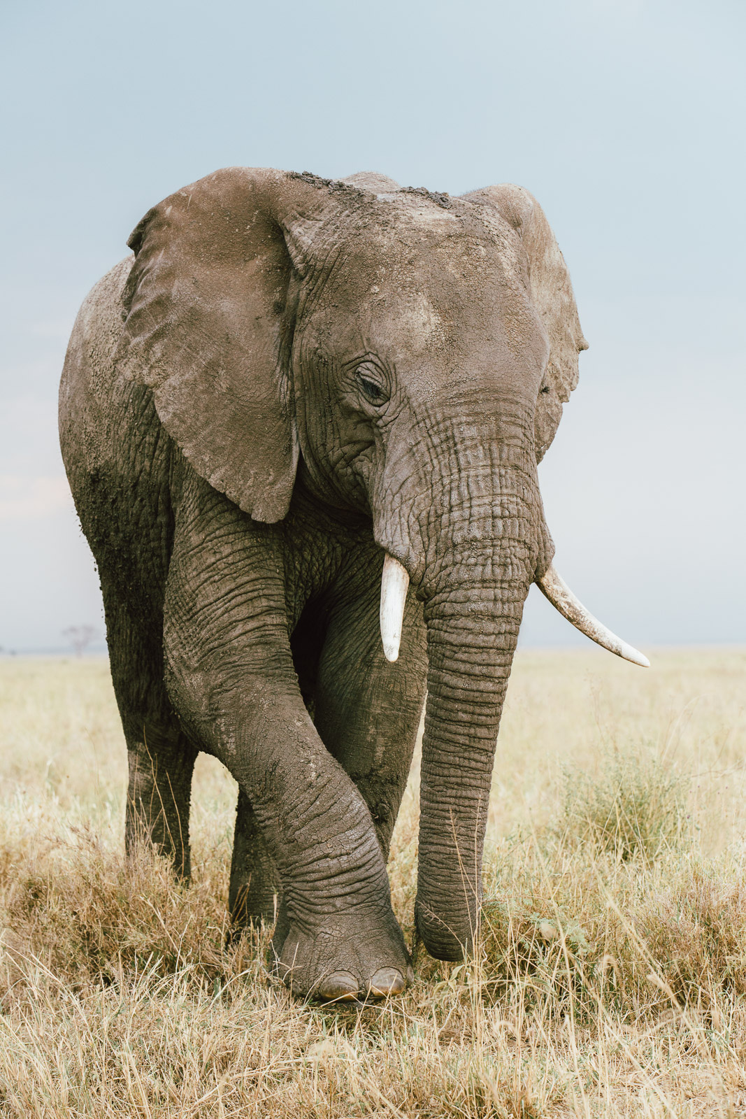 tanzania-africa-travel-photos-adventure-safari-7.jpg