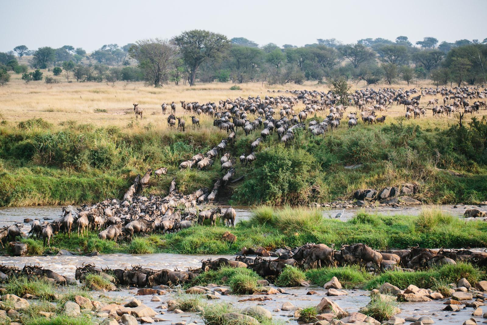 tanzania-africa-travel-photos-adventure-safari-1.jpg