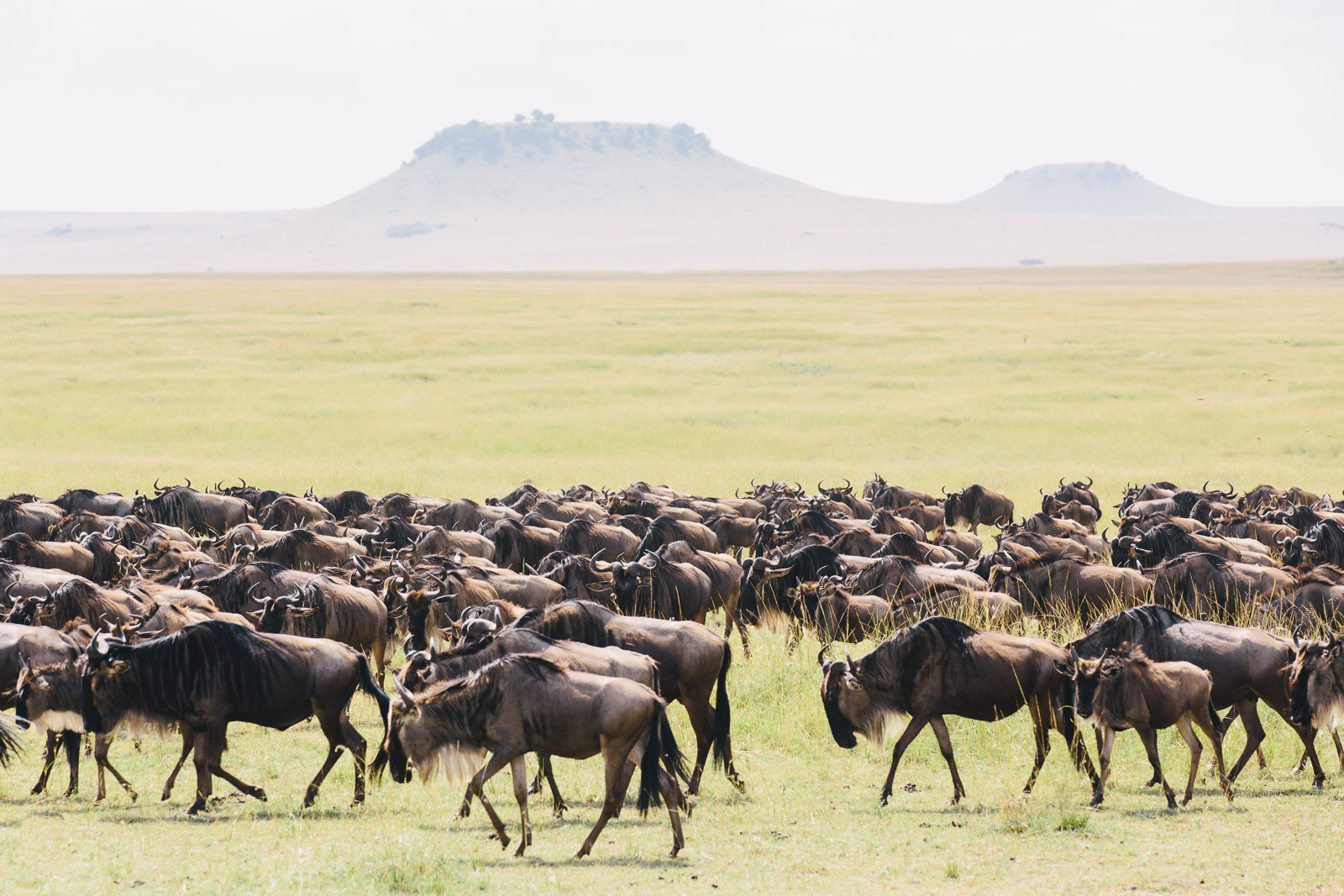 tanzania-africa-travel-photos-adventure-safari-4.jpg
