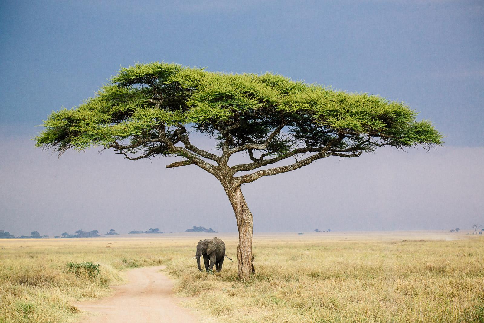 tanzania-africa-travel-photos-adventure-safari-6.jpg
