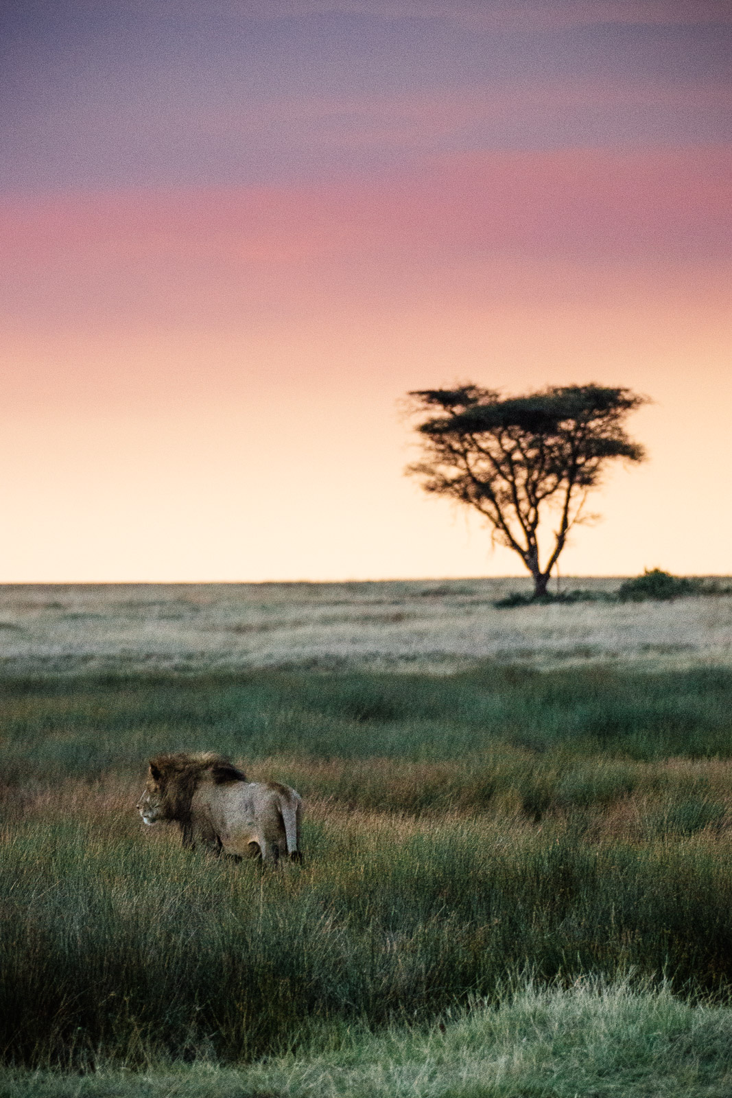 tanzania-africa-travel-photos-adventure-safari-8.jpg