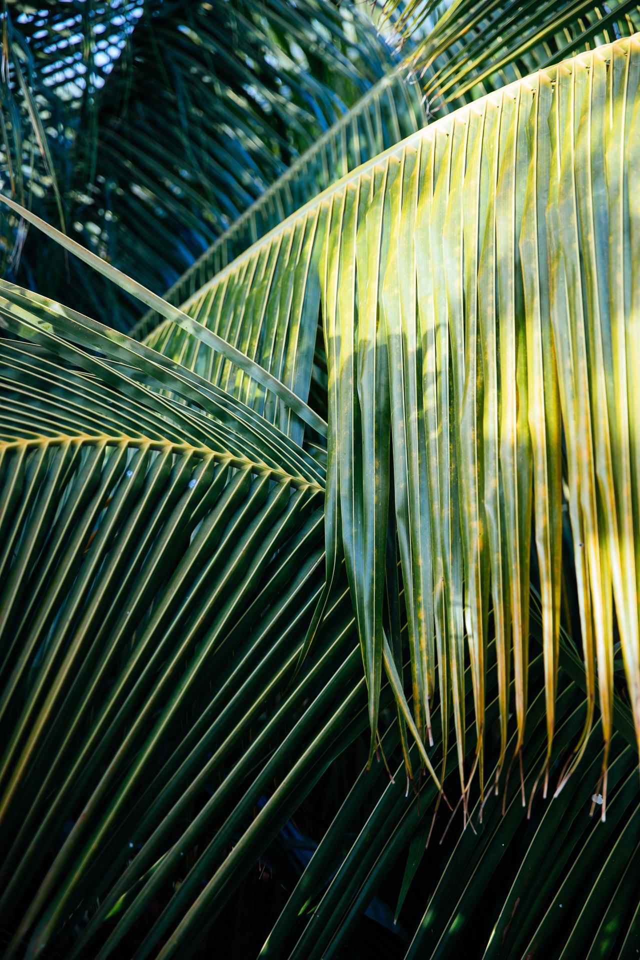 caribbean-hotel-resort-photographer-olas-tulum-mexico-3639.jpg