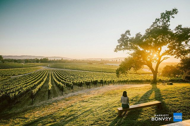 I recently took the new @americanexpress Marriott Bonvoy credit card for a photo tour of Napa Valley and shot these images for @cntraveler. Words by @pawljebara (link in bio). Thank you @lucas_gdos and team for this boozy gig. 🍷 #cntraveler #americanexpress #marriottbonvoy #advertising #napavalley