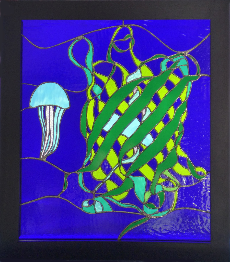 Excitation (Green Fluorescent Protein)