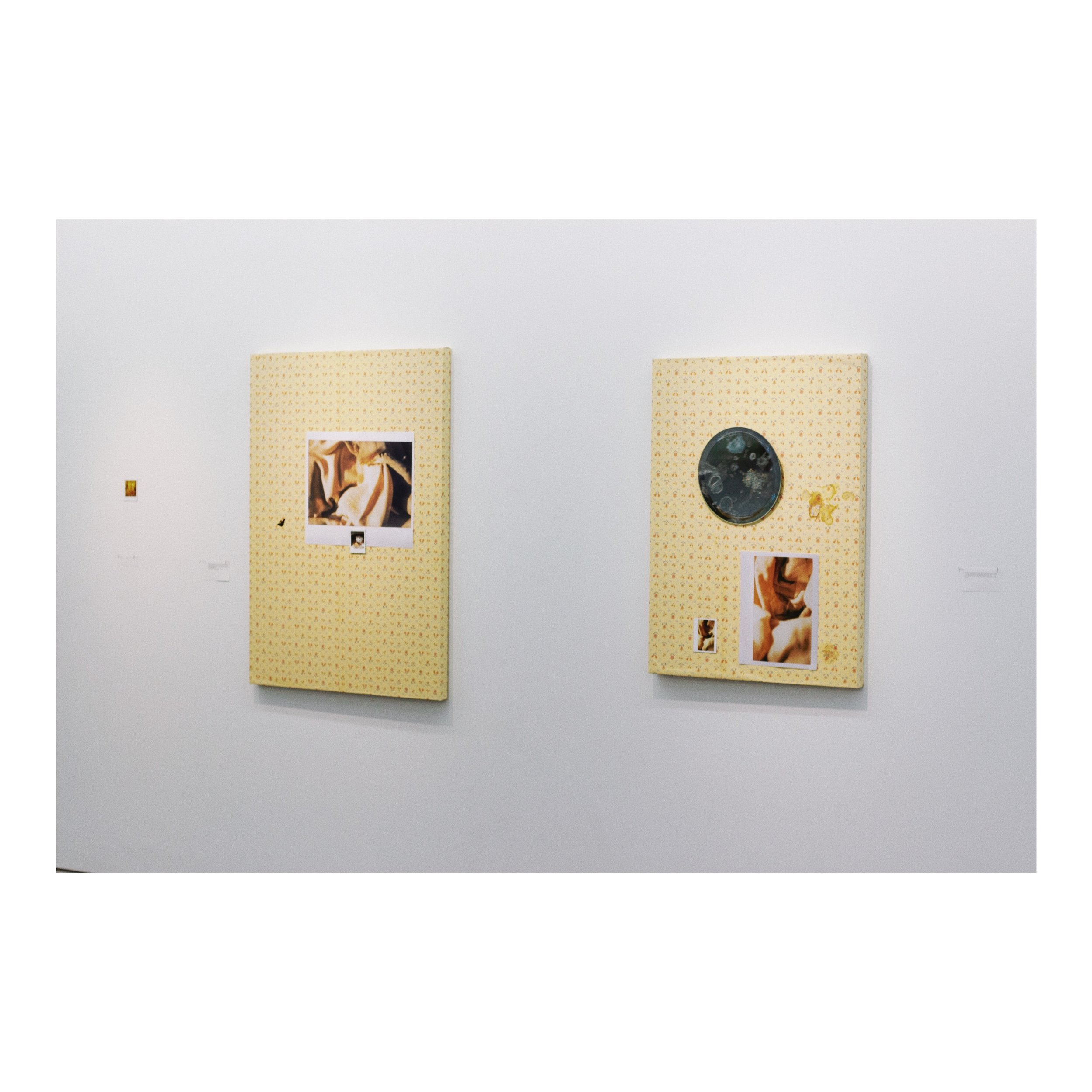 installation shot,  2019    two wall-pieces, polaroid